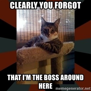 The Most Interesting Cat in the World - clearly you forgot that i'm the boss around here