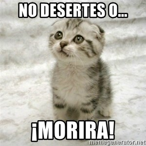 Can haz cat - No desertes o... ¡MORIRA!