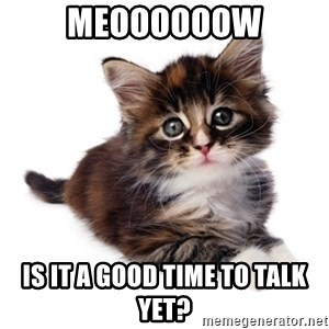 fyeahpussycats - Meoooooow Is it a good time to talk yet?