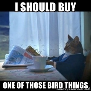 I should buy a boat - I should buy  one of those bird things