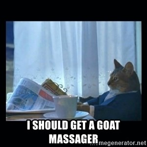 1% cat -  i should get a goat massager