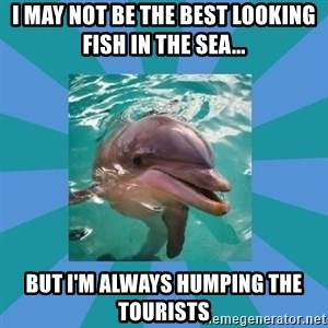Dyscalculic Dolphin - I may not be the best looking fish in the sea... But I'm always humping the tourists