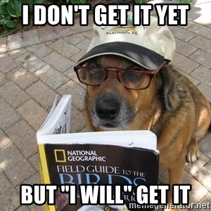 """Dog Studying - I DON'T GET IT YET BUT """"I WILL"""" GET IT"""
