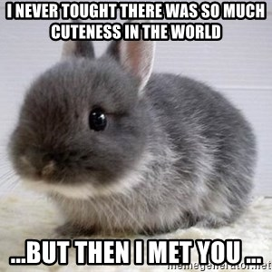 ADHD Bunny - I never tought there was so much cuteness in the world ...but then i met you ...