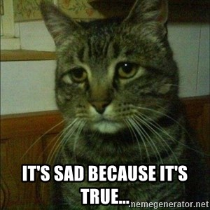 Depressed cat 2 -  It's sad because it's true...