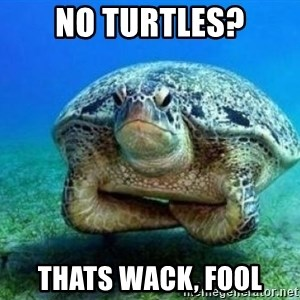disappointed turtle - no turtles? thats wack, fool