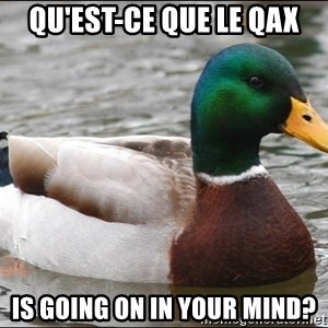Actual Advice Mallard 1 - qu'est-ce que le qax is going on in your mind?