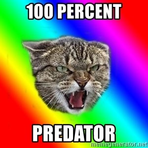 Impudent cat - 100 percent predator
