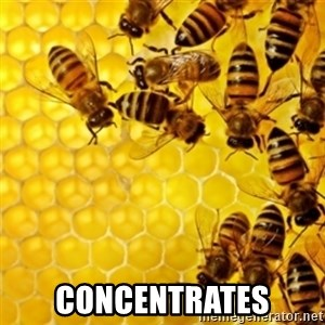 Honeybees -  CONCENTRATES