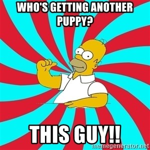 Frases Homero Simpson - Who's getting another puppy? THIS GUY!!