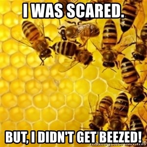 Honeybees - I was scared. But, I didn't get Beezed!