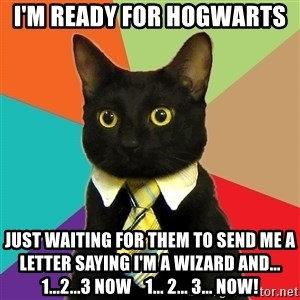 Business Cat - i'm ready for Hogwarts  just waiting for them to send me a letter saying i'm a wizard and... 1...2...3 NOW    1... 2... 3... NOW!