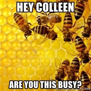 Honeybees - Hey colleen Are you this busy?