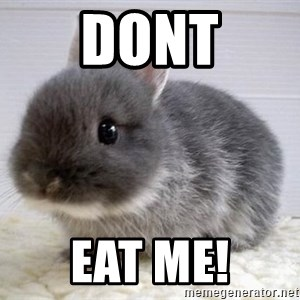 ADHD Bunny - Dont Eat me!