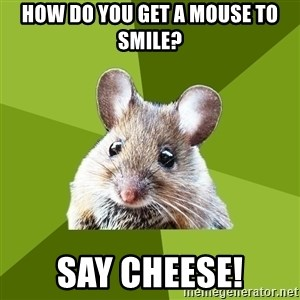 Prospective Museum Professional Mouse - How do you get a mouse to smile? Say Cheese!