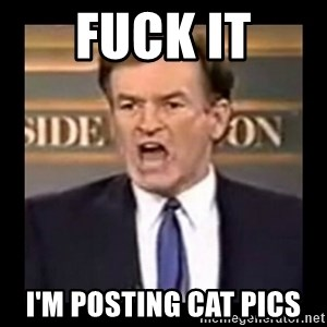 Fuck it meme - FUCK IT I'm posting cat pics
