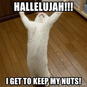 praise the lord cat - Hallelujah!!! I get to keep my nuts!