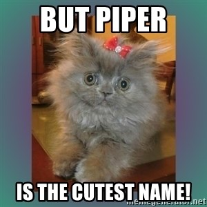 cute cat - But Piper  Is the cutest name!