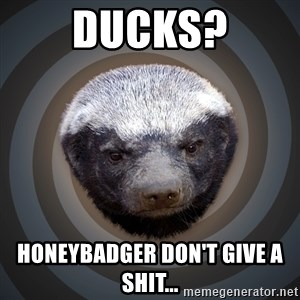 Fearless Honeybadger - Ducks? Honeybadger don't give a shit...