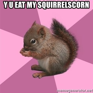 Shipper Squirrel - Y U EAT MY SQUIRRELSCORN
