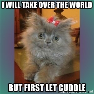 cute cat - I will take over the WORLD But first let cuddle