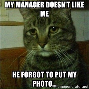 Depressed cat 2 - My manager doesn't like me  He forgot to put my photo...