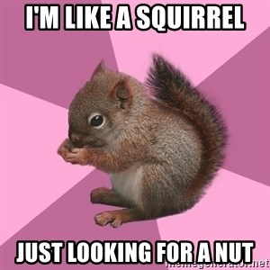 Shipper Squirrel - I'm like a squirrel Just looking for a nut