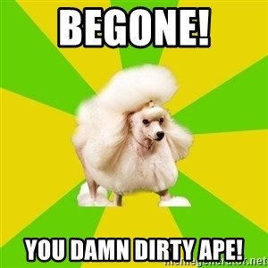 Pretentious Theatre Kid Poodle - BEGONE!  you damn dirty ape!