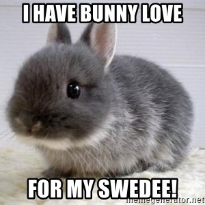 ADHD Bunny - i have bunny love for my swedee!