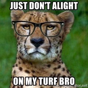 Hipster Cheetah - Just don't alight on my turf bro