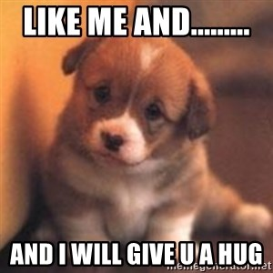 cute puppy - like me and......... and I will give u a hug