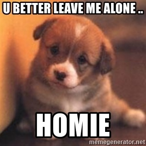cute puppy - u better leave me alone ..  homie
