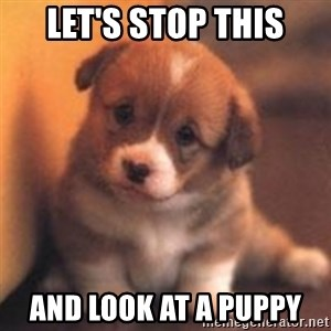 cute puppy - Let's stop this and look at a puppy