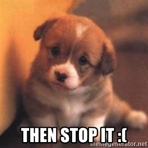 cute puppy -  Then stop it :(