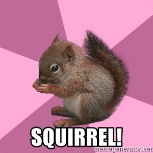 Shipper Squirrel -  Squirrel!