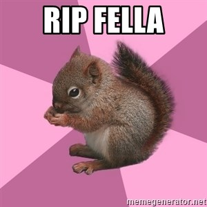 Shipper Squirrel - RIP fella