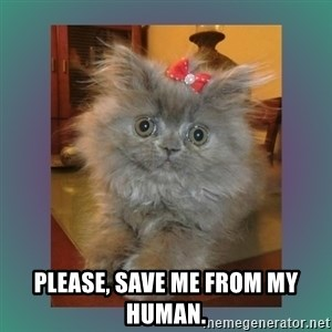 cute cat -  Please, save me from my human.