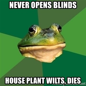 Foul Bachelor Frog - never opens blinds house plant wilts, dies