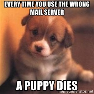 cute puppy - Every time you use the wrong mail server a puppy dies