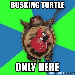 Aspiring Musician Turtle - busking turtle only here