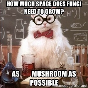 Chemistry Cat - How much space does fungi need to grow?    as         Mushroom as   possible