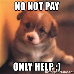 cute puppy - NO NOT PAY ONLY HELP :)