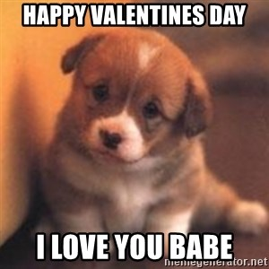 cute puppy - Happy Valentines Day I love you babe