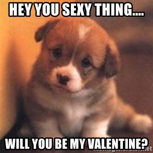 cute puppy - Hey you sexy thing.... Will you be my Valentine?