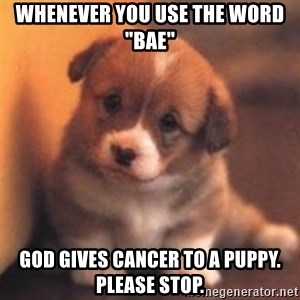 """cute puppy - Whenever you use the word """"Bae"""" God gives cancer to a puppy. please stop."""
