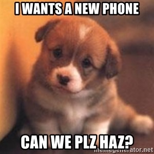 cute puppy - I wants a new phone Can we plz haz?