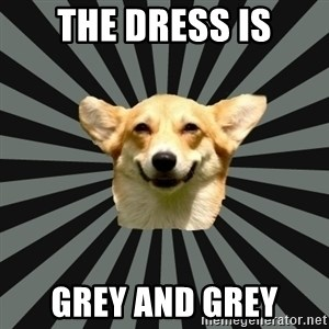 Color Blind Dog - THE DRESS IS GREY AND GREY