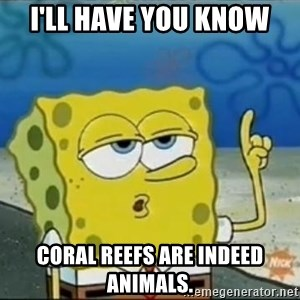 Spongebob - I'll have you know coral reefs are indeed animals.