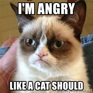 not funny cat - I'm angry  Like a cat should