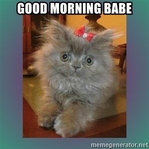 cute cat - Good morning babe